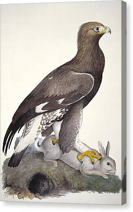 Golden Eagle, 19th Century Artwork Canvas Print by Science Photo Library