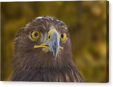 Canvas Print featuring the photograph Golden Eagle  by Brian Cross