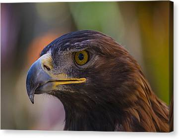 Golden Eagle Canvas Print by Garry Gay