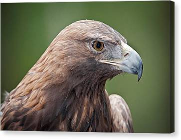 Golden Eagle Canvas Print by Tyson and Kathy Smith