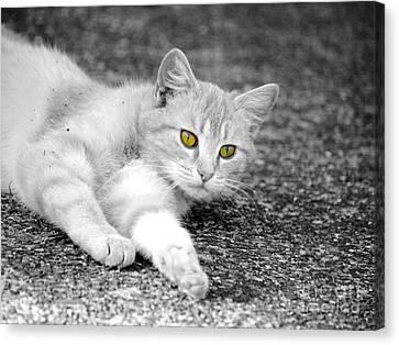 Golden Eyes Canvas Print by Jai Johnson