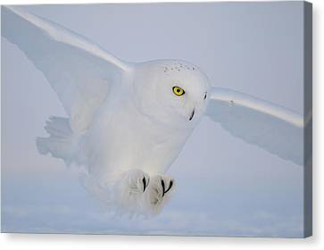 Golden Eyes On The Hunt Canvas Print by Yves Adams