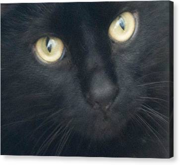 Golden Eyes Canvas Print by Rhonda Humphreys