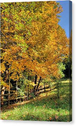 Canvas Print featuring the photograph Golden Fenceline by Gordon Elwell