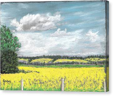 Golden Fields Of Alberta Canvas Print by Fiona Graham