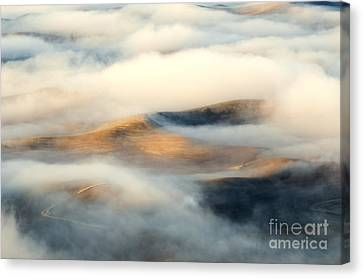 Golden Fleece Canvas Print by Mike Dawson