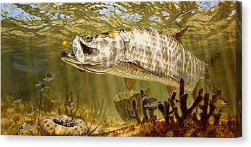 Golden Fly Tarpon Canvas Print by Don  Ray