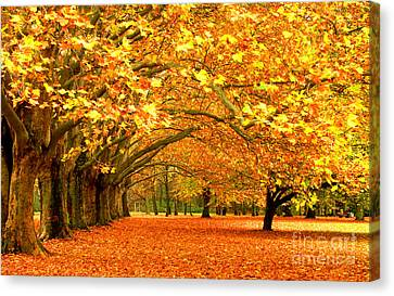 Golden Forest Canvas Print by Boon Mee