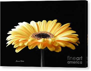 Golden Gerbera Daisy No 2 Canvas Print