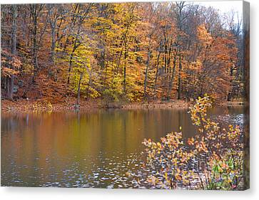Golden Glory Canvas Print by A New Focus Photography