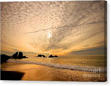 Golden Glow Of A Sunset Over Goat Rock California Canvas Print by Wernher Krutein