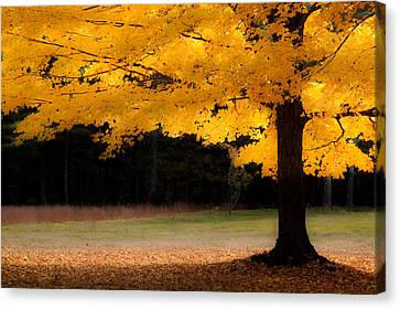Golden Glow Of Autumn Fall Colors Canvas Print by Jeff Folger