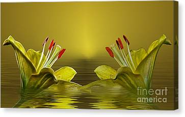 Canvas Print featuring the photograph Golden Glow by Shirley Mangini