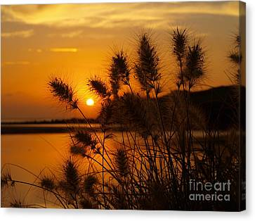 Canvas Print featuring the photograph Golden Glow by Trena Mara