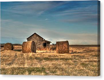 Golden Hay Canvas Print