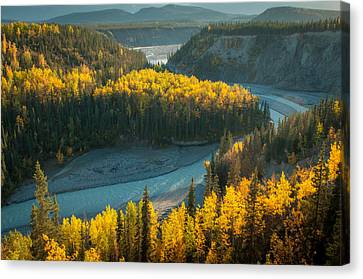 Golden Highlights Canvas Print by Roger Clifford