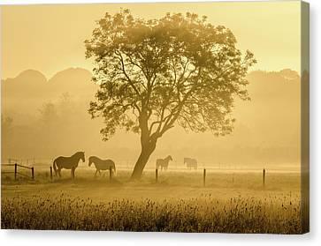 Golden Horses Canvas Print