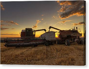 Golden Hour Grain Canvas Print by Mark Kiver