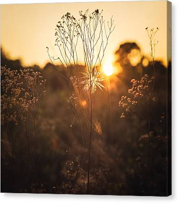 Golden Hour  Canvas Print