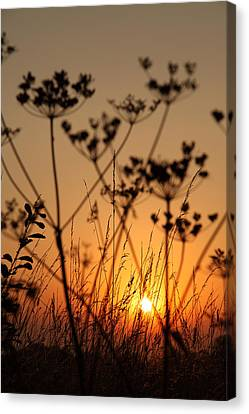 Golden Hour Canvas Print by Paul Lilley