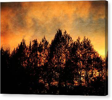 Golden Hours Canvas Print by Denise Beverly