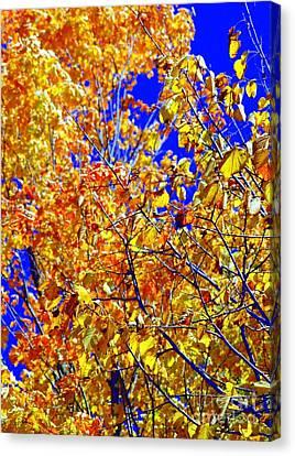Golden Canvas Print by Kathleen Struckle
