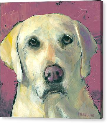Golden Lab Canvas Print - Golden Lab by Mary Medrano