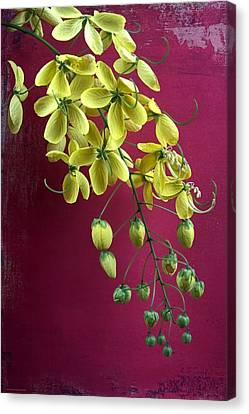 Golden Lantern Canvas Print by Chrystyne Novack