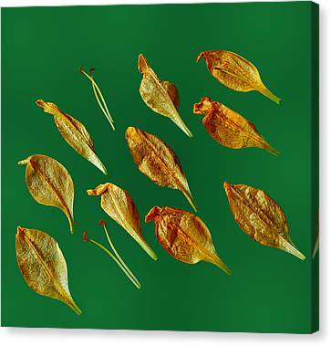 Canvas Print featuring the photograph Golden Leaves by Marwan Khoury