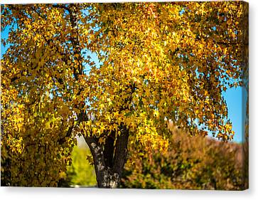 Canvas Print featuring the photograph Golden Leaves Of Autumn by Mike Lee