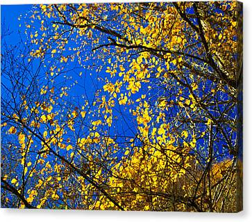Golden Leaves Canvas Print by Penny Lisowski