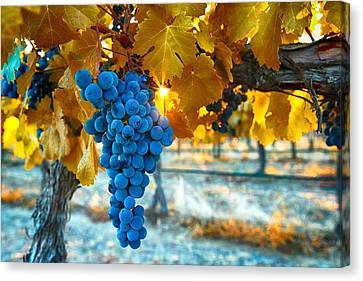 Golden Leaves With Grapes Canvas Print by Lynn Hopwood