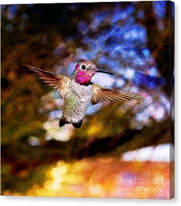 Golden Light Hummingbird Flight Canvas Print by Jeanette Brown