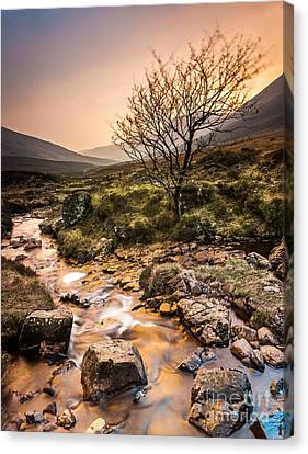Golden Light River Canvas Print