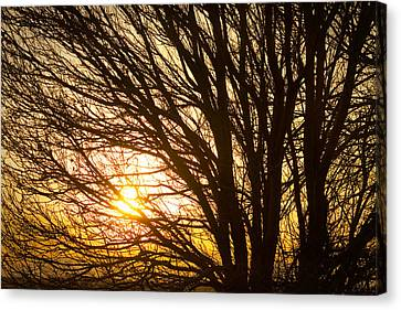 James Insogna Canvas Print - Golden Light Shining Through by James BO  Insogna