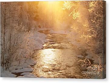 Golden Light Canvas Print by Sylvia  Niklasson