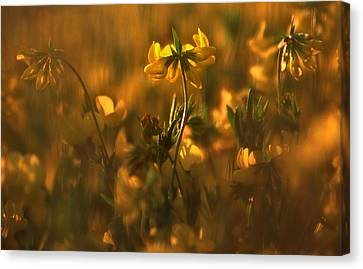 Canvas Print featuring the photograph Golden Light by Thomas Born