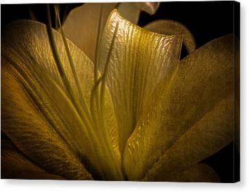 Canvas Print featuring the photograph Golden Lily by Dave Garner