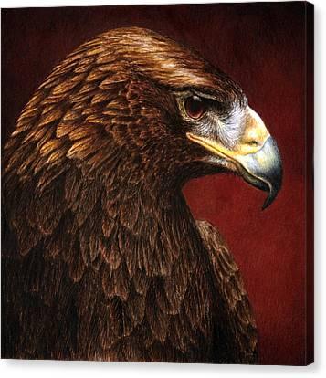 Golden Look Golden Eagle Canvas Print