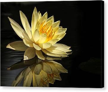 Golden Lotus Canvas Print