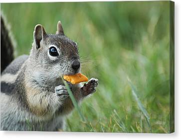 Canvas Print featuring the photograph Golden-mantled Ground Squirrel by Susan D Moody