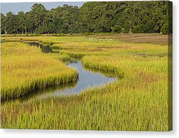 Golden Marsh Canvas Print by Patricia Schaefer