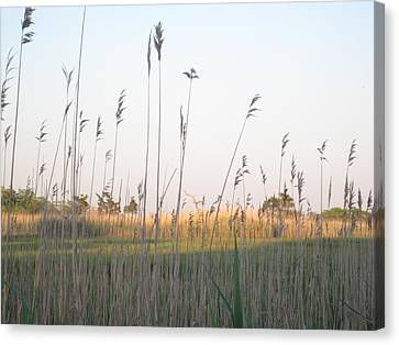 Golden Marshes Canvas Print
