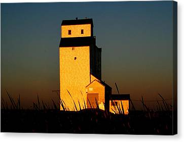 Golden Meadows Canvas Print by Larry Trupp