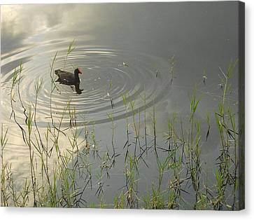 Golden Morning Canvas Print by Sheila Silverstein