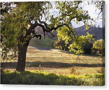 Golden Oaks Canvas Print by Sharon Foster