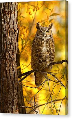 Golden Owl Canvas Print by Aaron Whittemore