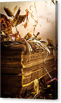Aging Canvas Print - Golden Pages Falling Flowers by Bob Orsillo