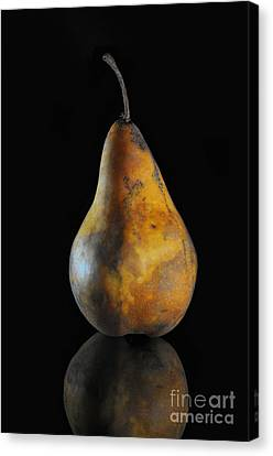 Golden Pear Canvas Print by Dan Holm