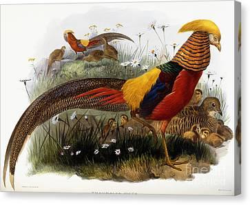 Golden Pheasants Canvas Print by Joseph Wolf